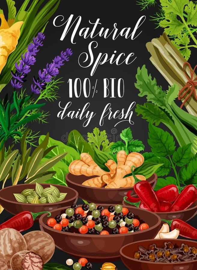 Especiaria e erva, cozinhando temperos e condimentos ilustração royalty free