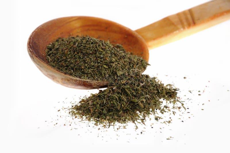 Especiaria Savory imagem de stock