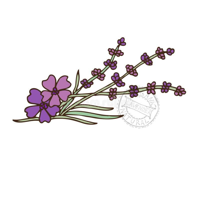 Especiaria tirada mão ilustração stock
