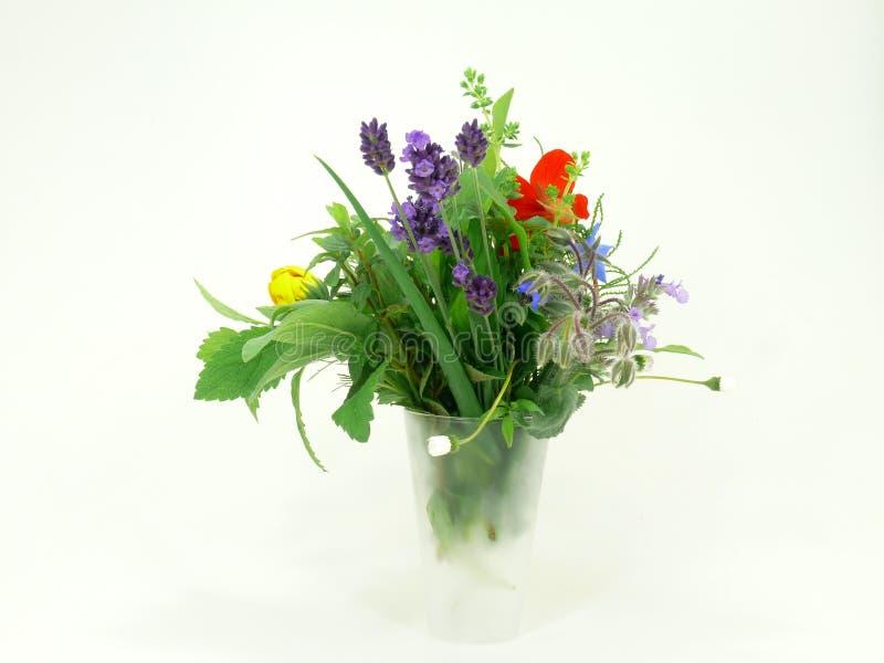 Especiarias e ervas imagens de stock royalty free