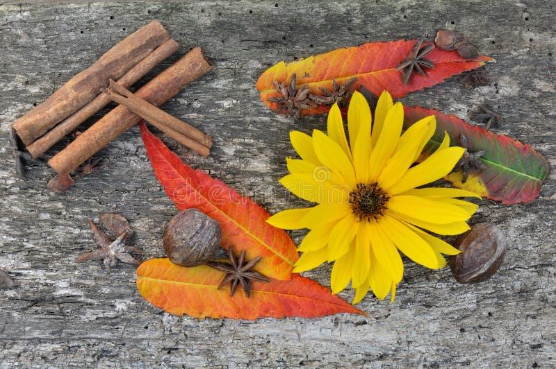 Especiarias, folhas e flor imagem de stock royalty free