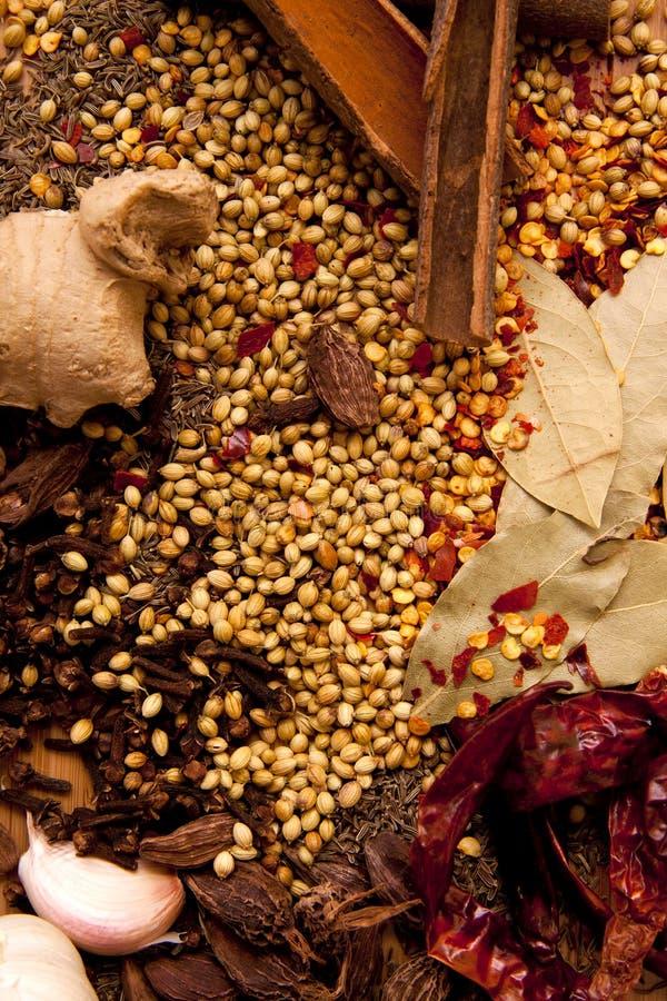 Especiarias indianas. imagem de stock
