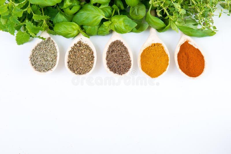 Especiarias secadas e frescas foto de stock