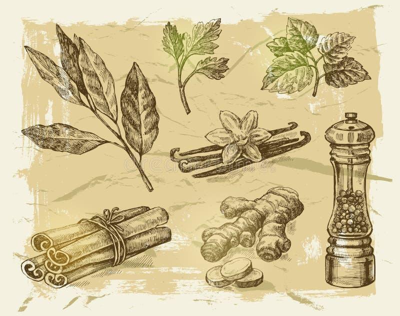 especias dibujadas mano stock de ilustración