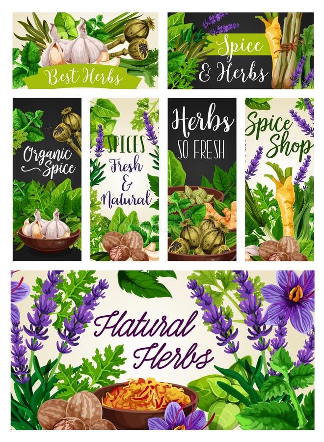 Especias e hierbas, cocinando condimentos, condimentos ilustración del vector