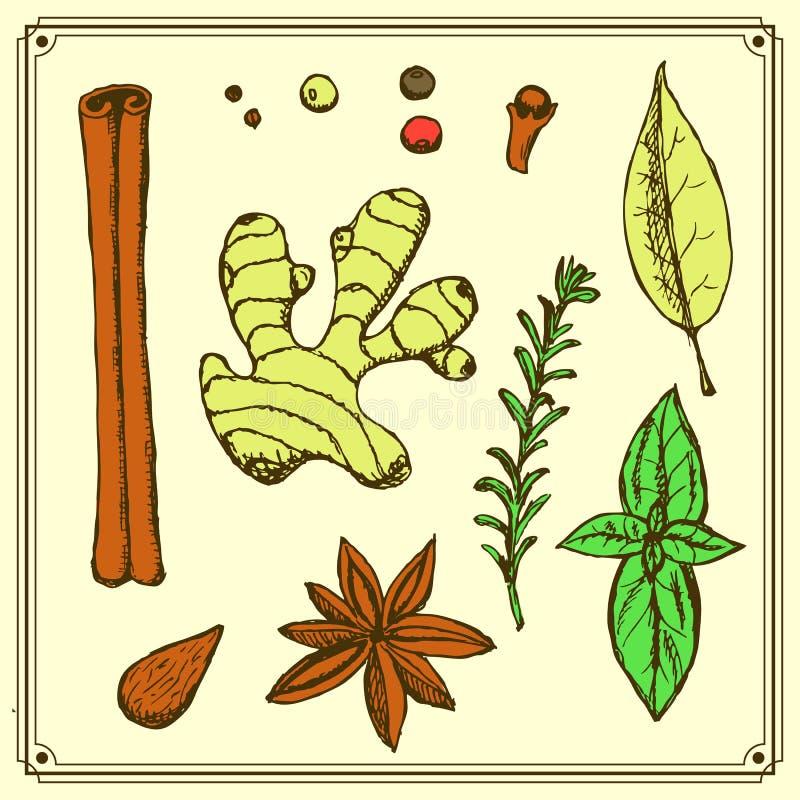 Especias e hierbas del bosquejo en estilo del vintage ilustración del vector