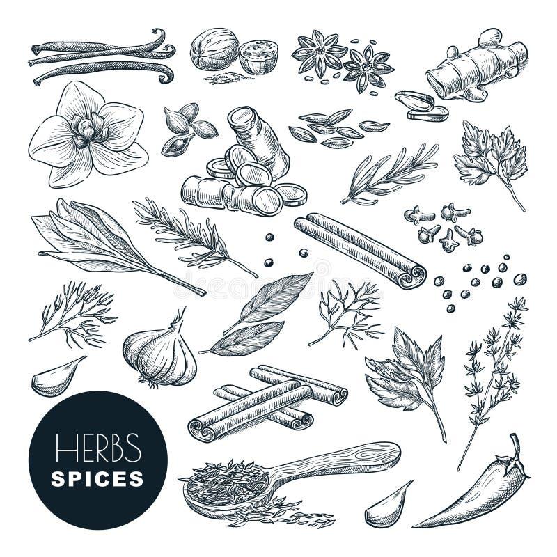 Especias, sistema de las hierbas Ejemplo exhausto del bosquejo de la mano del vector, aislado en el fondo blanco Cocinar iconos,  stock de ilustración