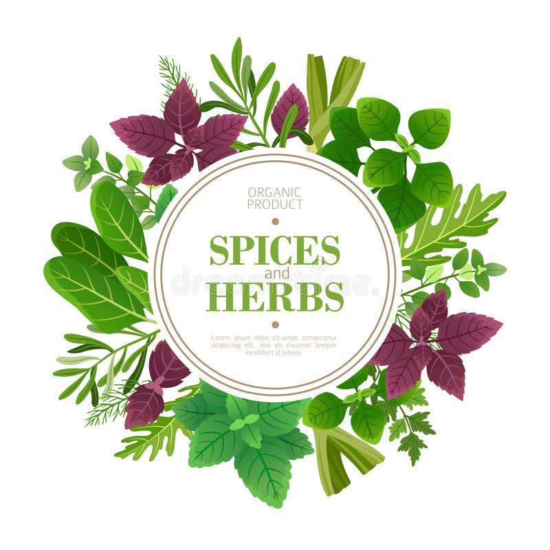 Especias y fondo de las hierbas Hierba fresca que cocina las plantas aromáticas Marco indio del vector de la comida ilustración del vector