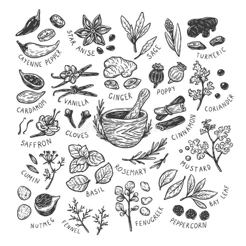 Especias y hierbas, sistema ilustración del vector