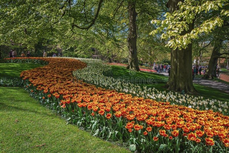 Especie multicolora de flores en el parque imágenes de archivo libres de regalías