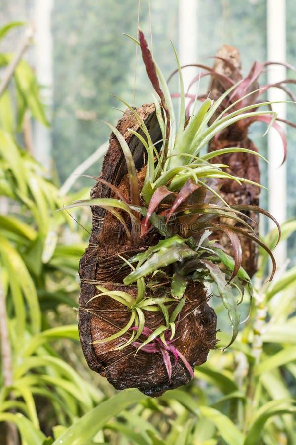 Especie rara de la orquídea fotos de archivo