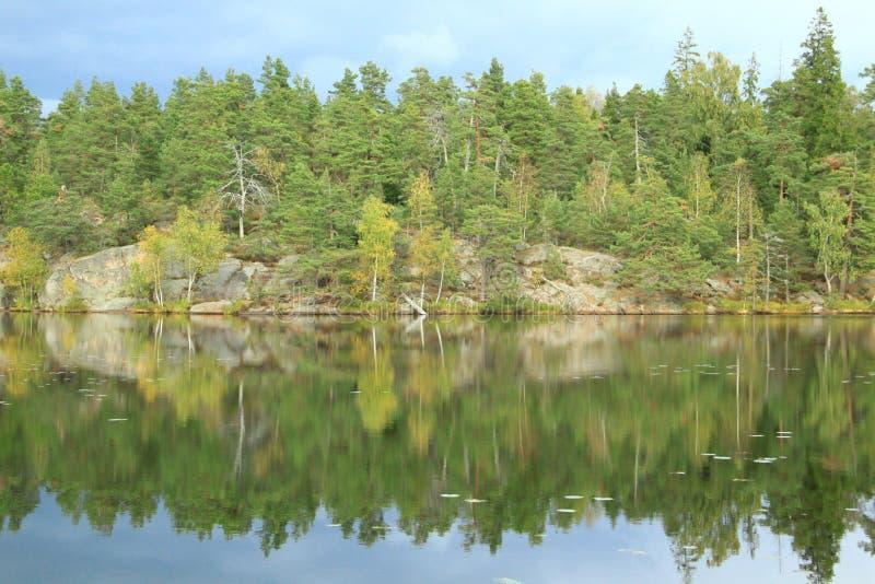 Espelhando as árvores fotografia de stock royalty free