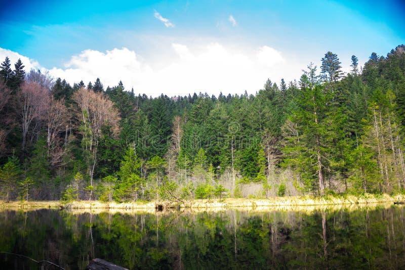 Espelho da natureza fotografia de stock