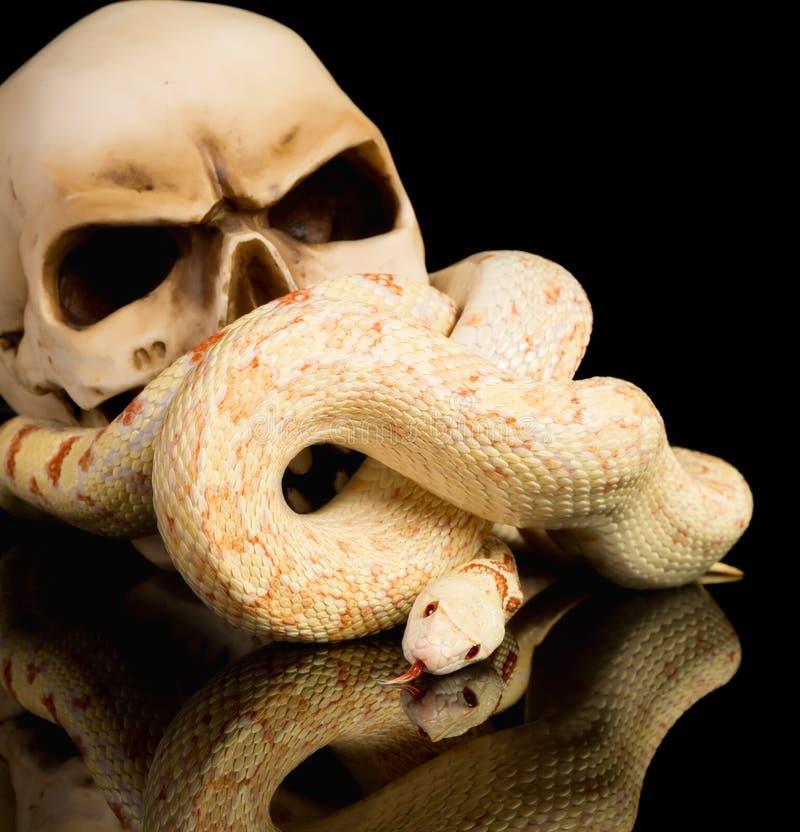 Espeluznante haloween la serpiente fotografía de archivo libre de regalías