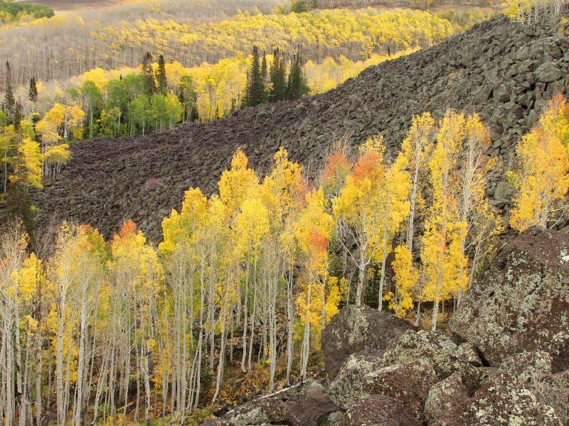 Espen in de herfst stock fotografie