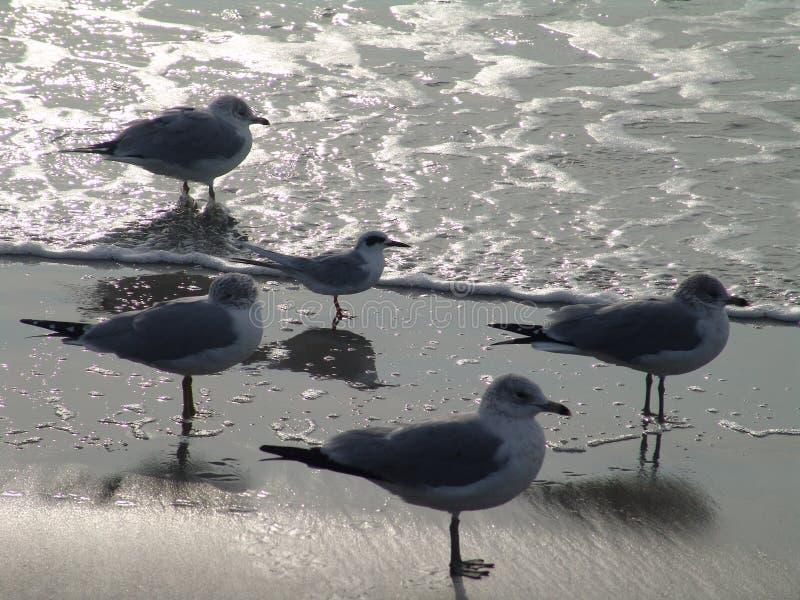 Espera das gaivotas imagem de stock