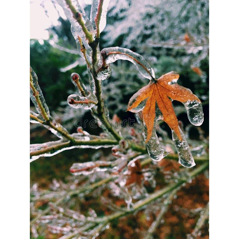 Esperança congelada de fotografia de stock