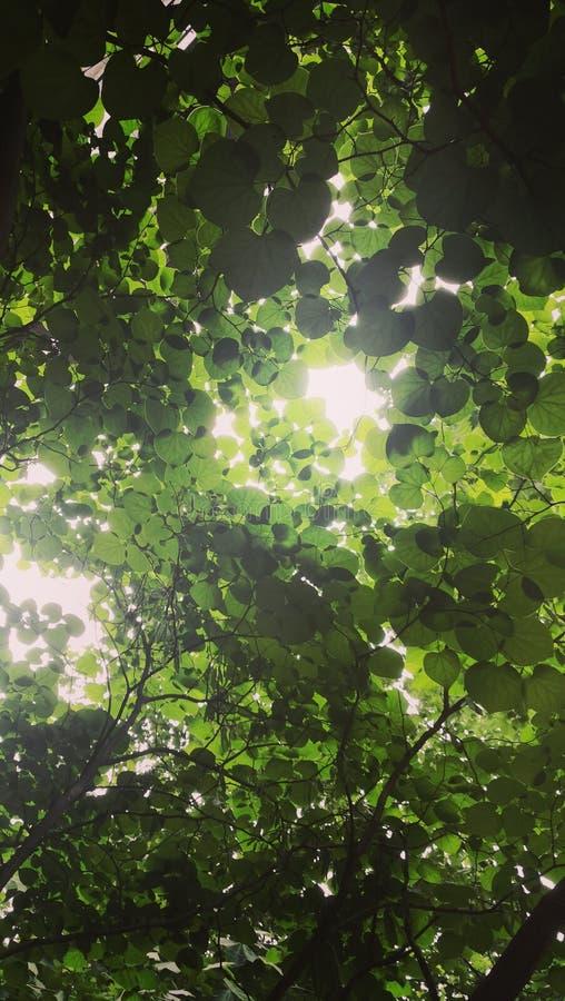 Esperança verde fotos de stock royalty free