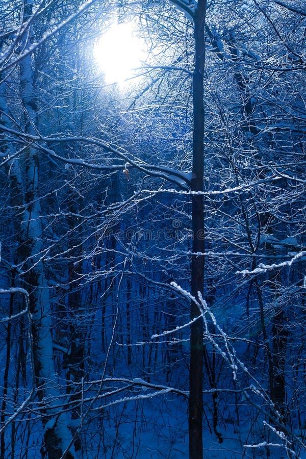 Esperanza del invierno imagen de archivo libre de regalías