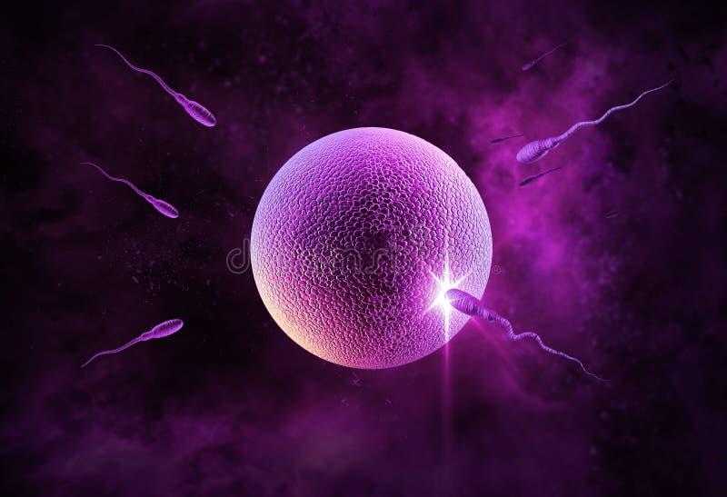 Esperma y huevo ilustración del vector