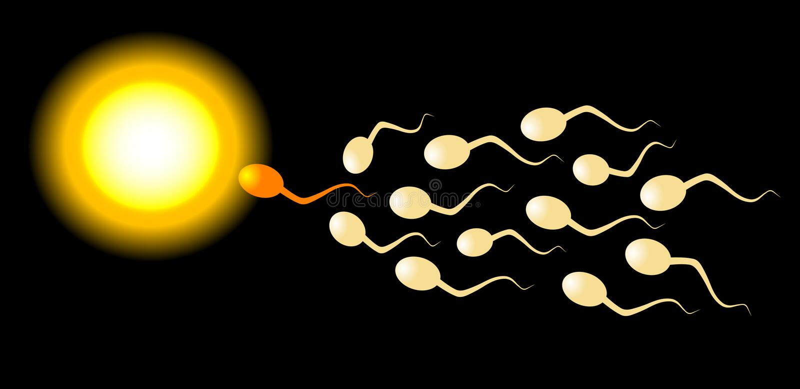 Espermatozoides ilustración del vector