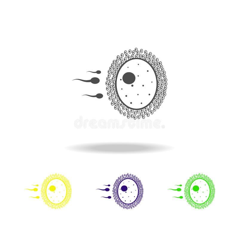 espermatozoides e ícones coloridos do órgão do óvulo Elemento de ícones coloridos das partes do corpo Sinais e ícone da coleção d ilustração stock