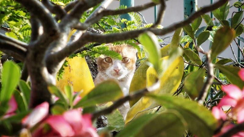 Espião em mim