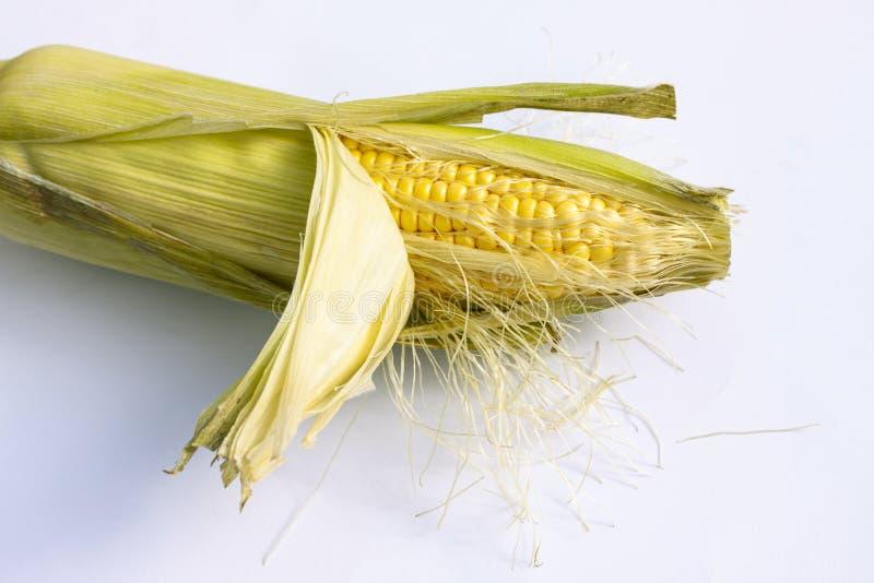 Espiga de milho com folhas Com espa?o da c?pia imagens de stock royalty free