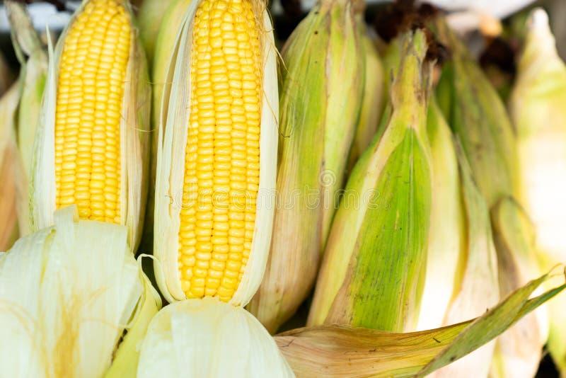 Espiga de milho crua fresca no milho empilhado imagem de stock