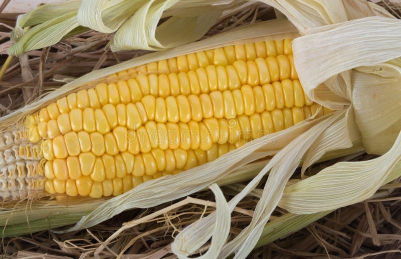 Espiga de milho doce cozinhada imagem de stock royalty free