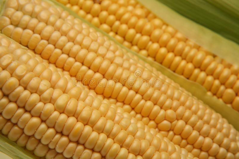 Espiga de milho fresca imagens de stock royalty free