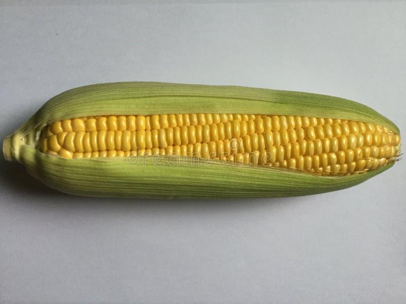 Espiga de milho fresco Isolado fotos de stock