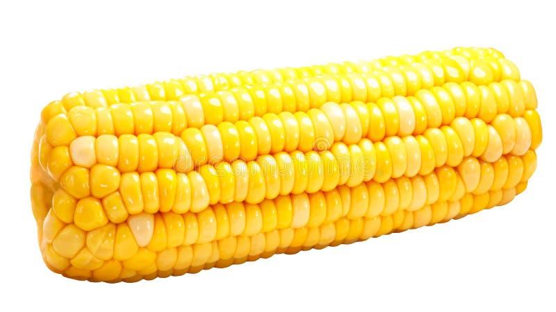 A espiga de milho inteira do milho isolou-se, trajeto foto de stock royalty free