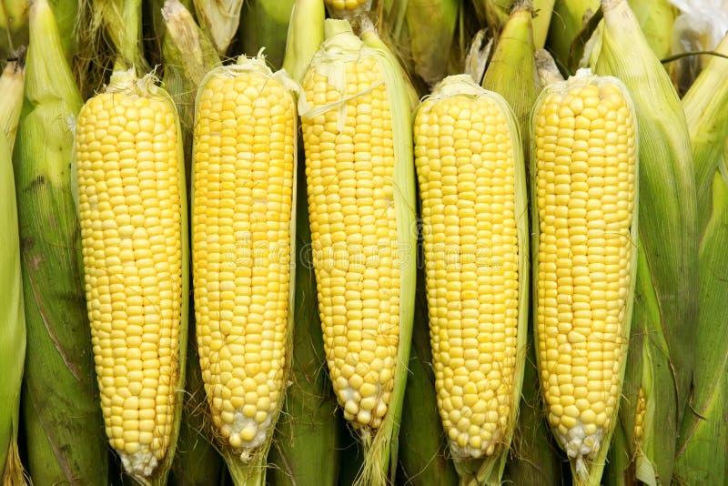 Espiga de milho macia imagens de stock