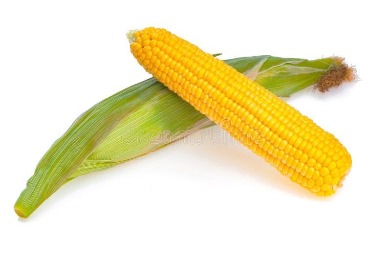 Espiga de trigo dulce amarilla con otro no pelado, aislada en wh fotos de archivo libres de regalías