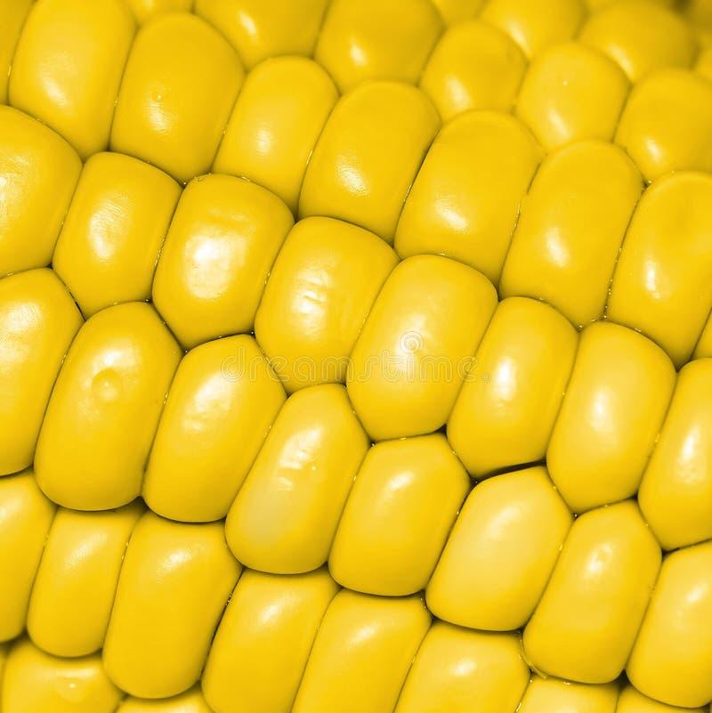 Espigas de milho amarelas foto de stock