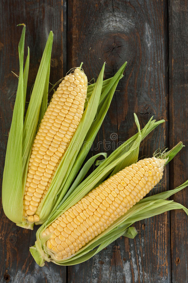 Espigas de milho frescas imagem de stock