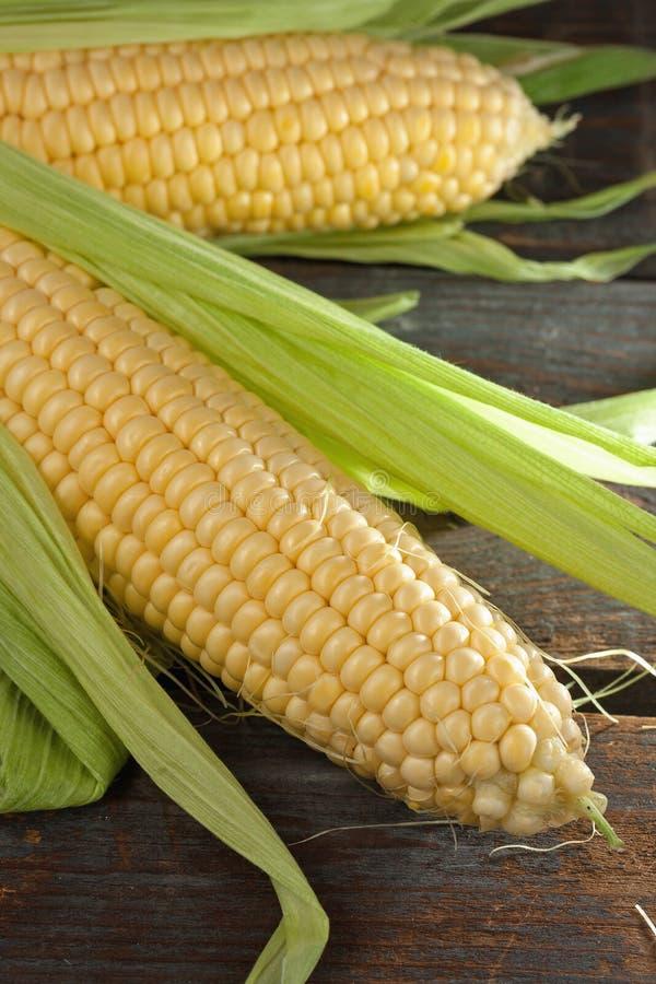 Espigas de milho frescas foto de stock
