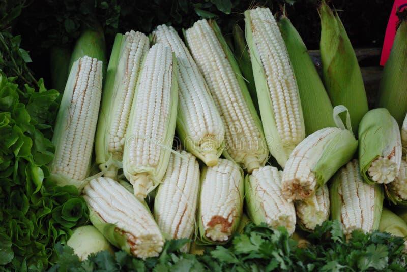 Espigas de milho frescas em um mercado do fram de Cidade do México imagens de stock royalty free