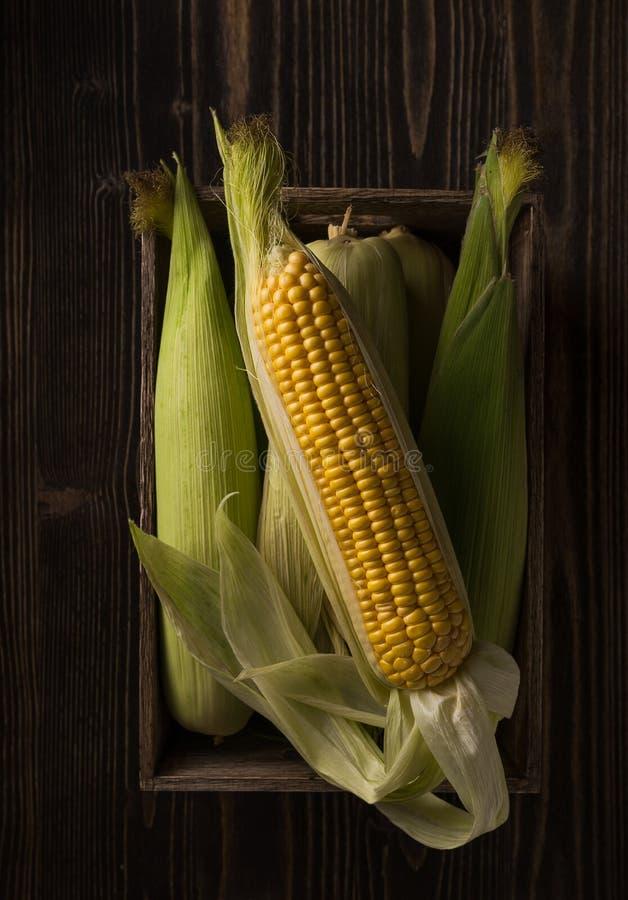 Espigas de milho frescas na tabela de madeira áspera escura Ainda vida na Dinamarca imagens de stock royalty free