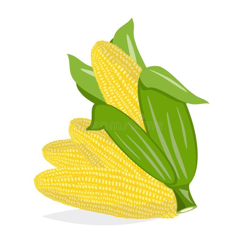 Espigas de milho no fundo branco Grupo do vetor ilustração stock