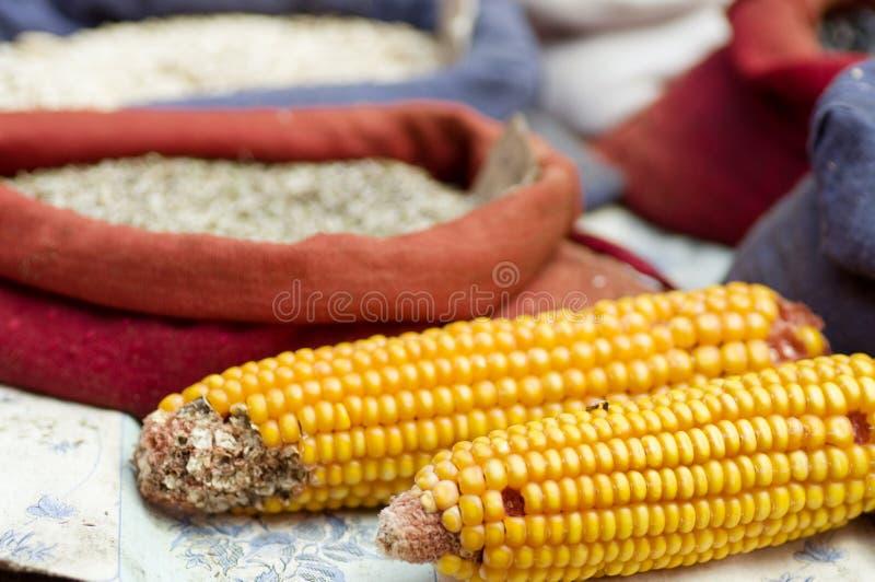 Espigas de milho secadas em um mercado foto de stock