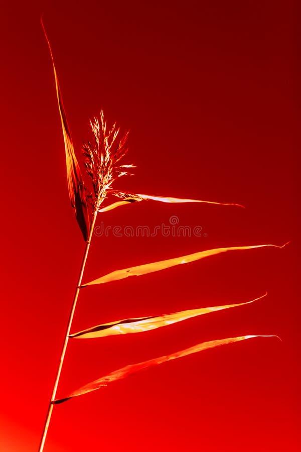 Espiguilla borrosa abstracta como bailarín en un fondo rojo stock de ilustración
