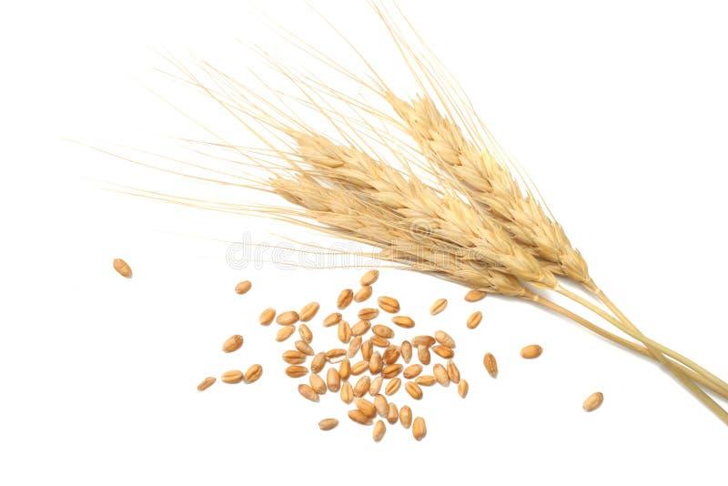 Espiguillas y granos del trigo en un fondo blanco Visión superior fotografía de archivo