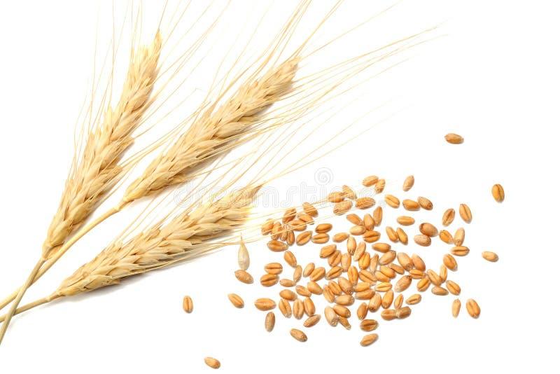 Espiguillas y granos del trigo en un fondo blanco Visión superior imagen de archivo libre de regalías