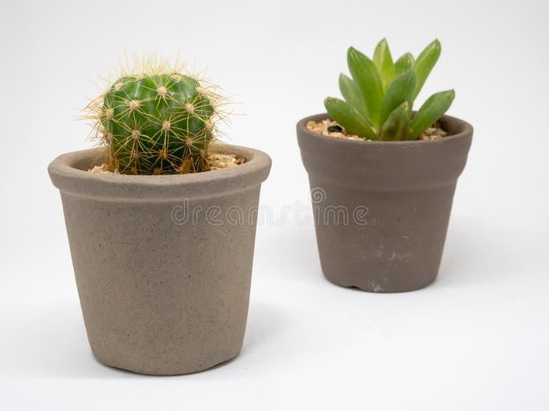 Espina CONTRA ningún Thorn Cactus imágenes de archivo libres de regalías