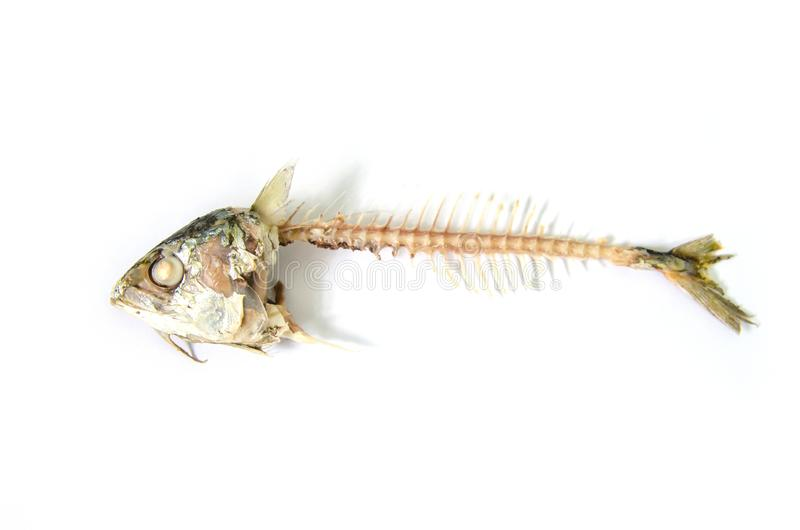 Espina de pez imagenes de archivo