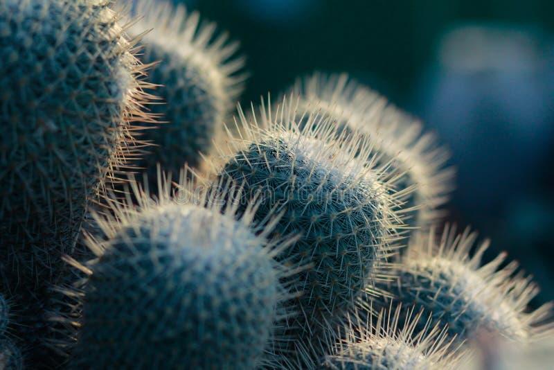 Espina del sostenido del cactus fotos de archivo