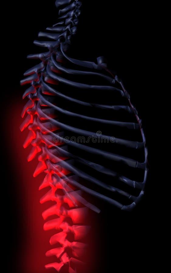 Espina dorsal ilustración del vector