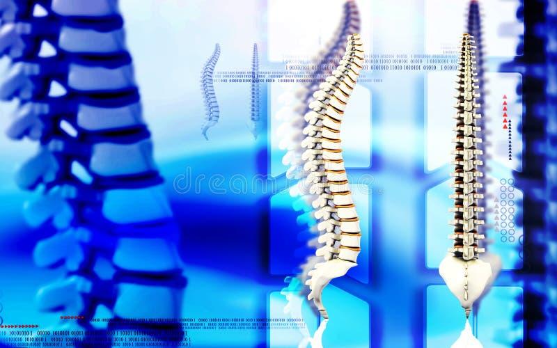 Espina dorsal fotos de archivo